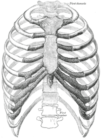 Proper rib is vital for oxygen delivery and for preventing abnormal activation of neurolymphatic reflexes.